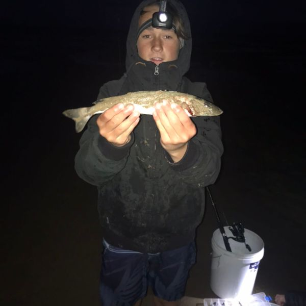 1 lbs / 14 in Spotted sillago caught by Rory Kearns