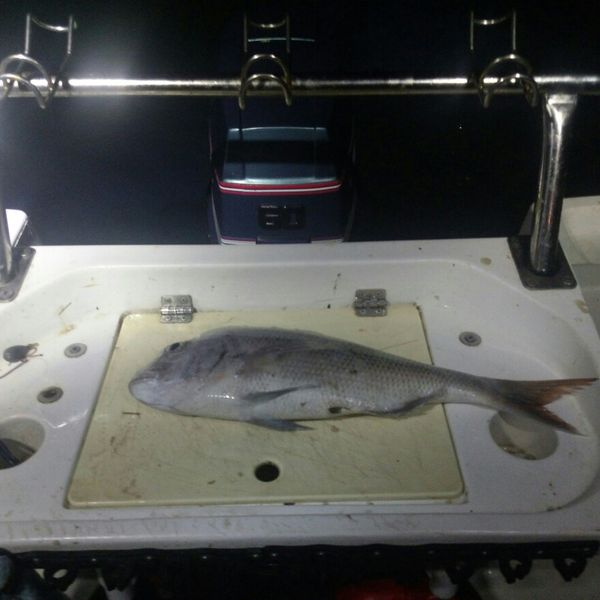 21 in Australasian snapper caught by Dani Simpson