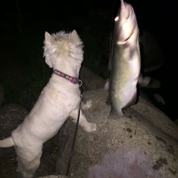 1.06 lbs / 11 in Channel catfish caught by Steven T