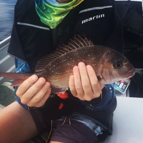 13 in Australasian snapper caught by Taj Webber