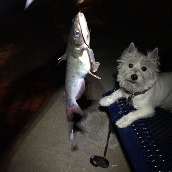 0.63 lbs / 9 in Channel catfish caught by Steven T