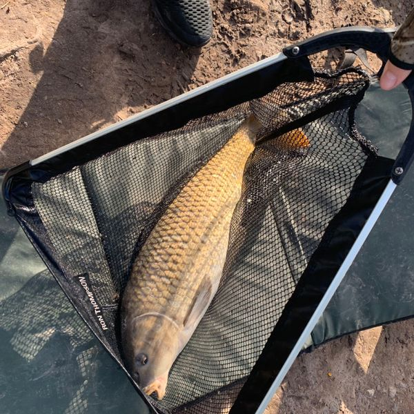 7.06 lbs Common carp caught by sienna Fallows