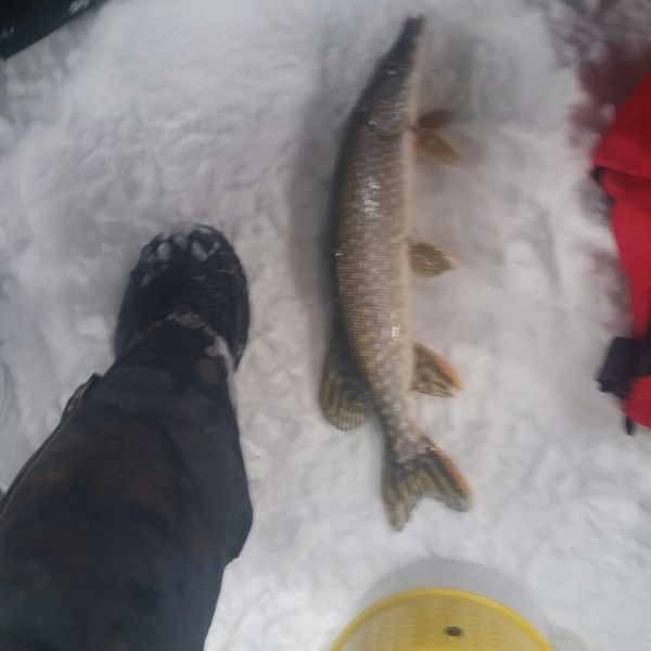 Northern pike caught by Bruce Kettle