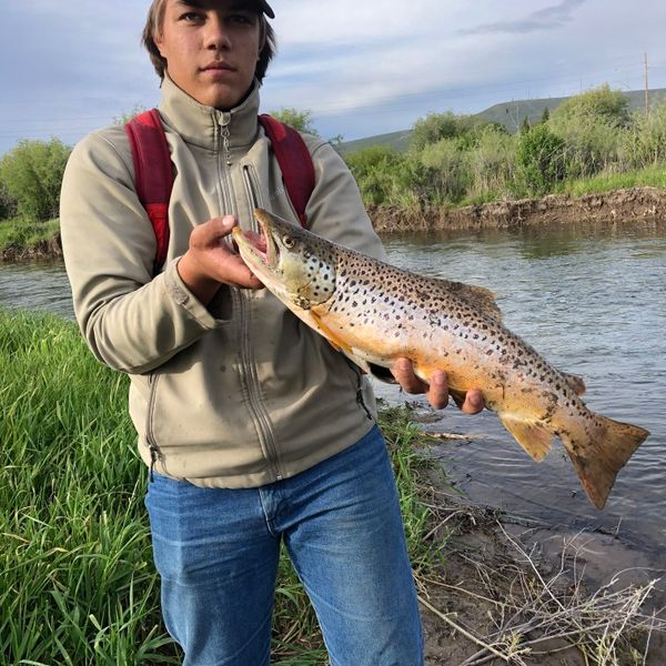 6.19 lbs / 21 in Brown trout (fario) caught by Wyatt Brent