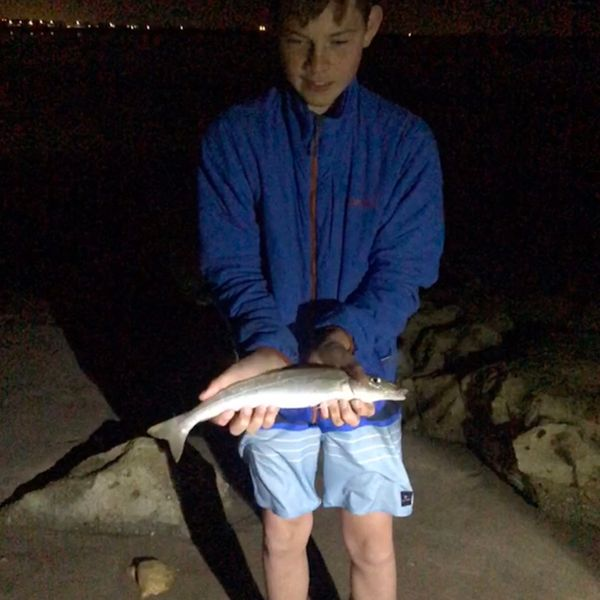 1 lbs / 16 in Spotted sillago caught by Rory Kearns