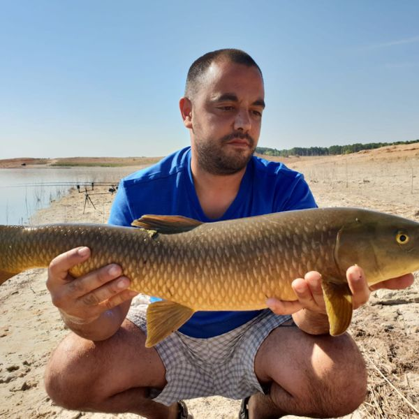 Common Barbel caught by Aitor Perez