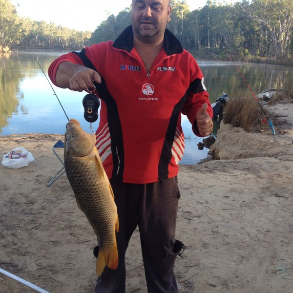 11 lbs / 24 in Common carp caught by Toni Ziday