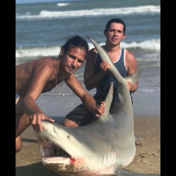 Bull shark caught by ProdigyFishing Tx