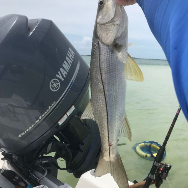Common snook caught by Chris Crown