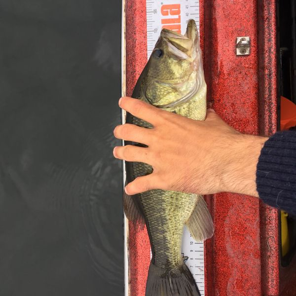 15 in Largemouth bass caught by Jay Dickinson