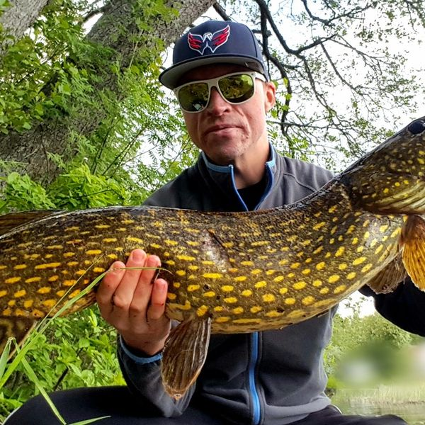 18.5 lbs / 42 in Northern pike caught by Jocke Persson