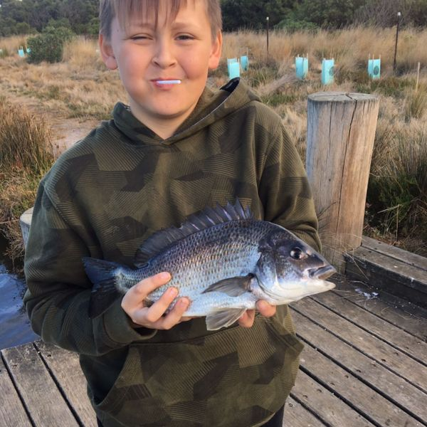 3 lbs / 16 in Southern black bream caught by ad ler