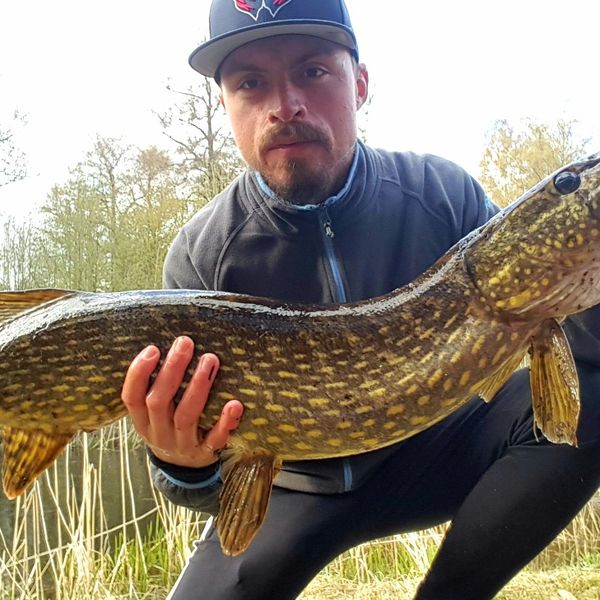 13.65 lbs / 38 in Northern pike caught by Jocke Persson