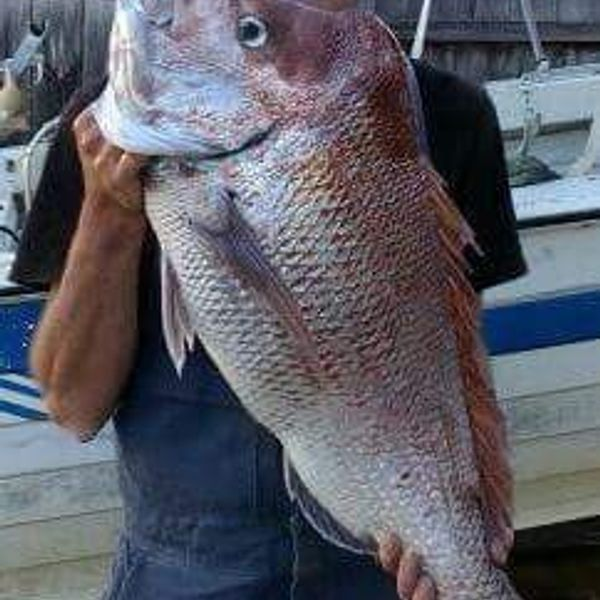 25 lbs / 39 in Australasian snapper caught by Bruce Lee