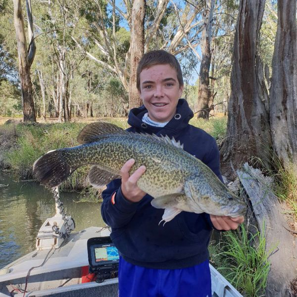 26 in Murray cod caught by Zachary Howard