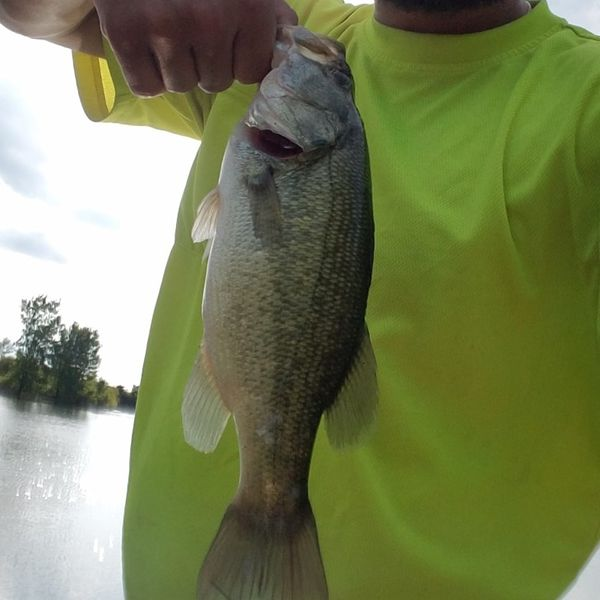 Largemouth bass caught by Ethan Eatherton