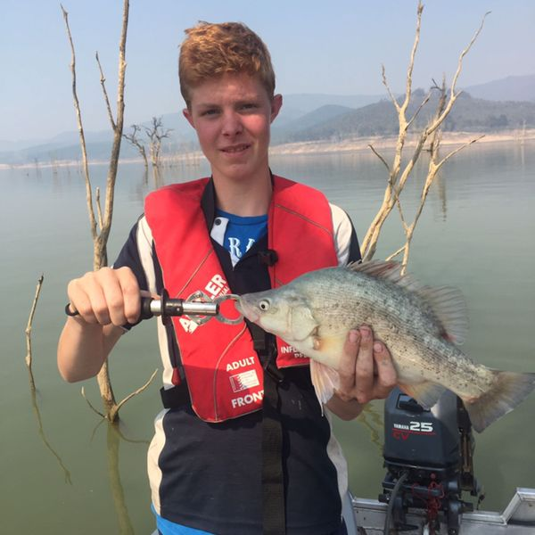 16 in Golden perch caught by Liam Whitling