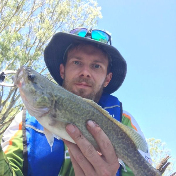 13 in Murray cod caught by Jesse Stone
