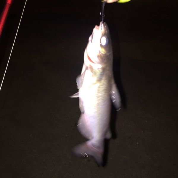 Channel catfish caught by Steven T