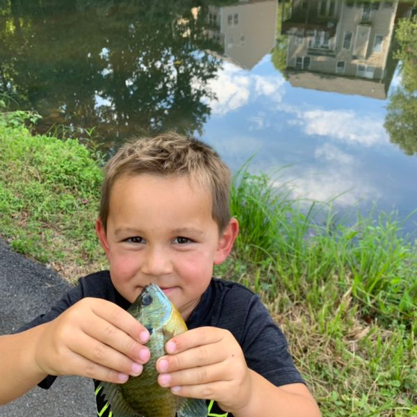 Bluegill caught by Pete Rooney