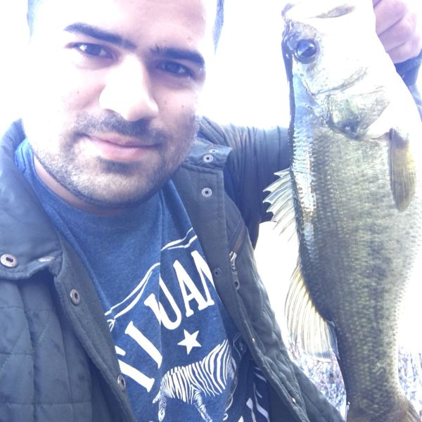 3.94 lbs / 14 in Largemouth bass caught by Isaac Valdez