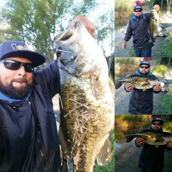 9.6 lbs / 22 in Largemouth bass caught by anthony Mercado