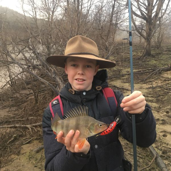 13 in European perch caught by Taj Webber