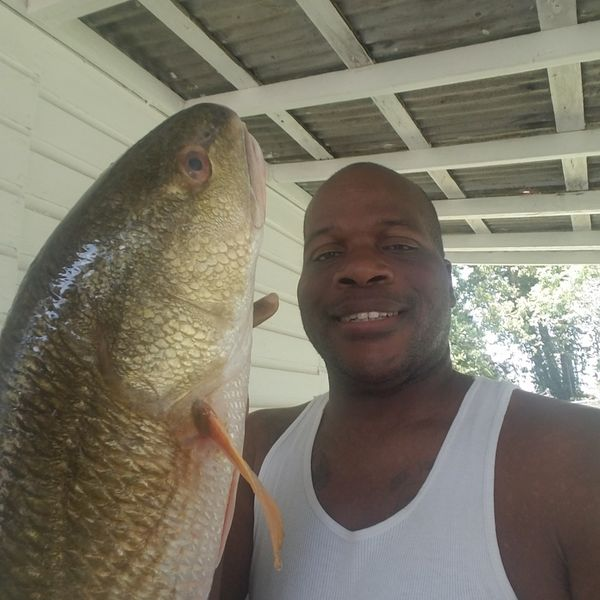 24 lbs / 28 in  caught by Derry Ray
