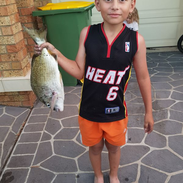 18 in Surf bream caught by Chuck Smith