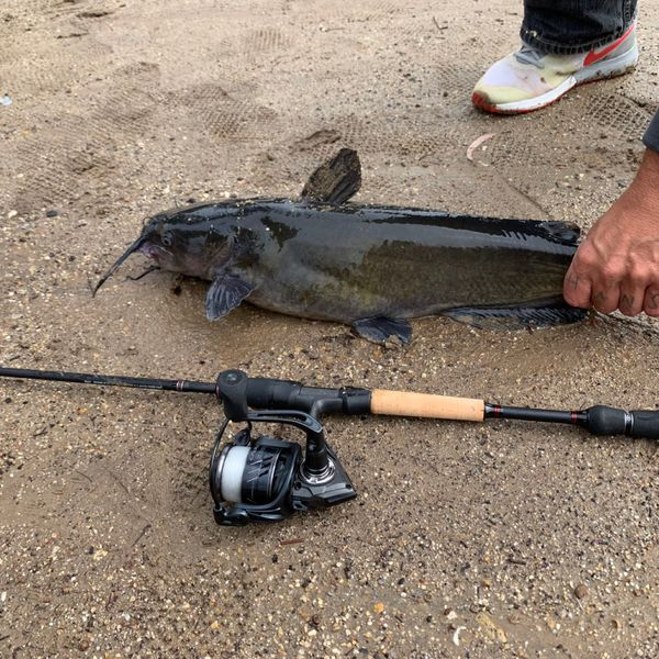 6.13 lbs / 24 in Channel catfish caught by Chris  Delatorre