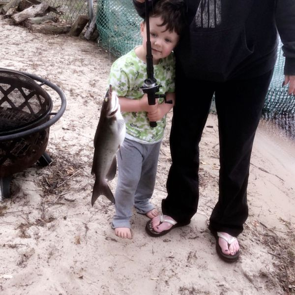 Channel catfish caught by Christopher DiMaio