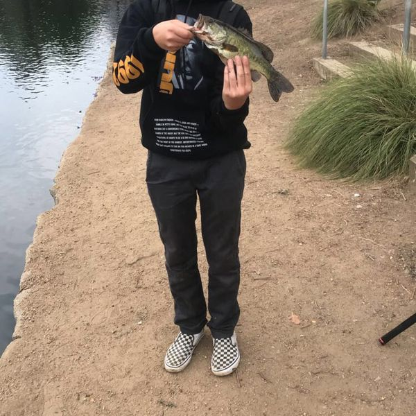 1 lbs / 12 in Largemouth bass caught by Ryder Romero