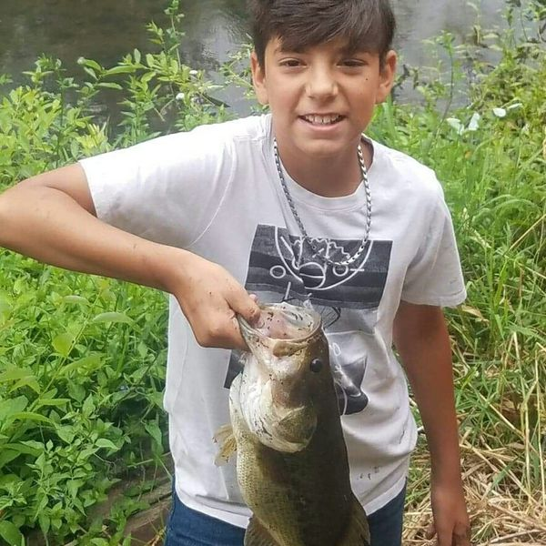 3 lbs / 17 in Largemouth bass caught by Nico Gutierrez