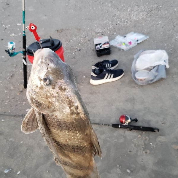 4.5 lbs / 18 in Black drum caught by Ramiro Alvarez