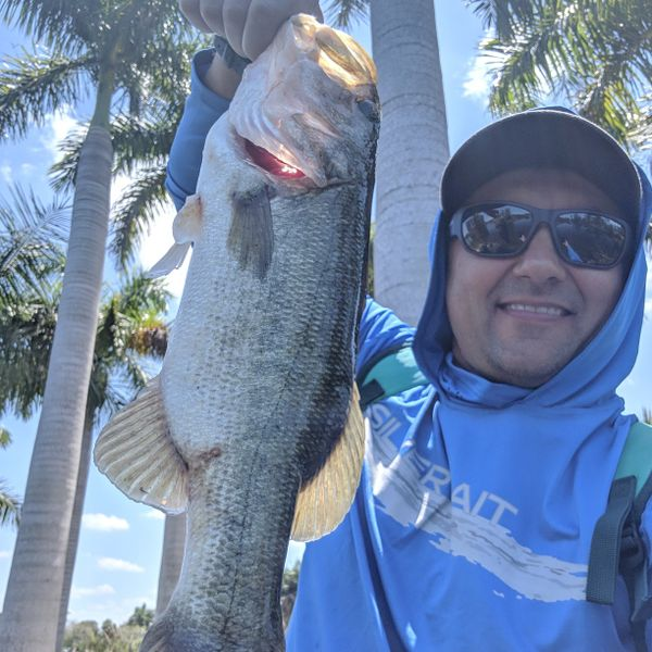 Largemouth bass caught by Mark Moch