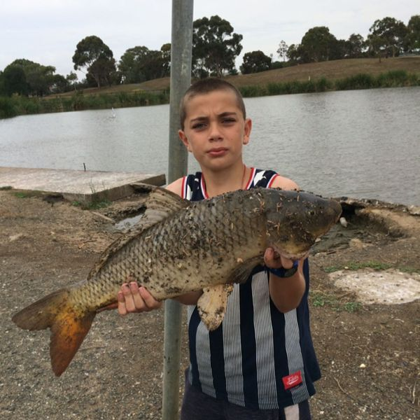 8.82 lbs / 28 in Grass carp caught by Charles Azzopardi