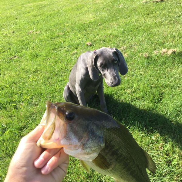 2.06 lbs / 16 in Largemouth bass caught by Landon Russom