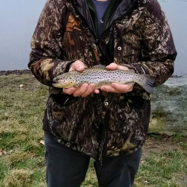12 in Brown trout caught by Randy G