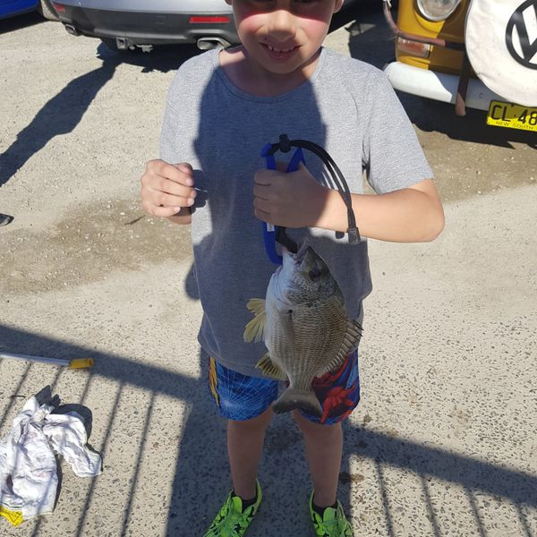 15 in Surf bream caught by Chuck Smith
