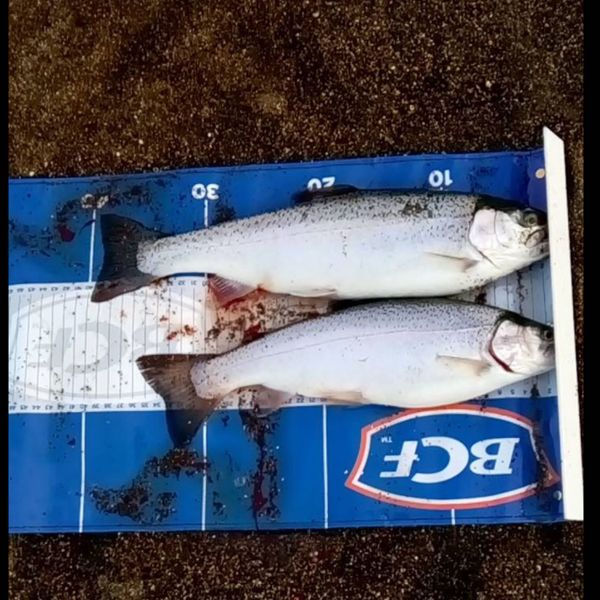 14 in Chinook salmon caught by Isaac Baulch