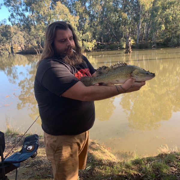 Murray cod caught by wade Mazur